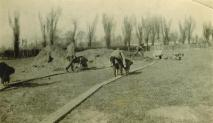 1926 Poplar Road Ground Clearing-04