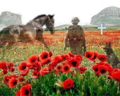 war-poppies